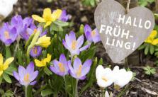 Fit Für Den Frühling