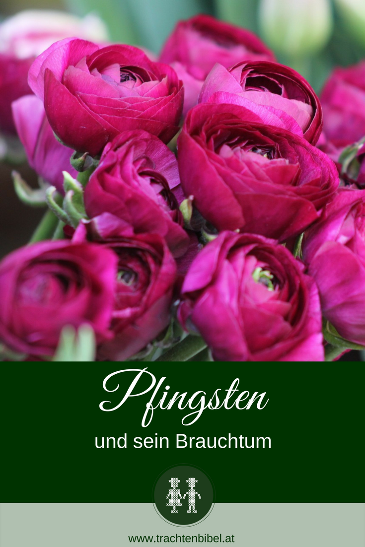 Pfingstrosen in Magenta