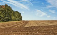 Bauernregeln Wertvoll Unsinn