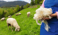 Schafwolle Filz Südtirol